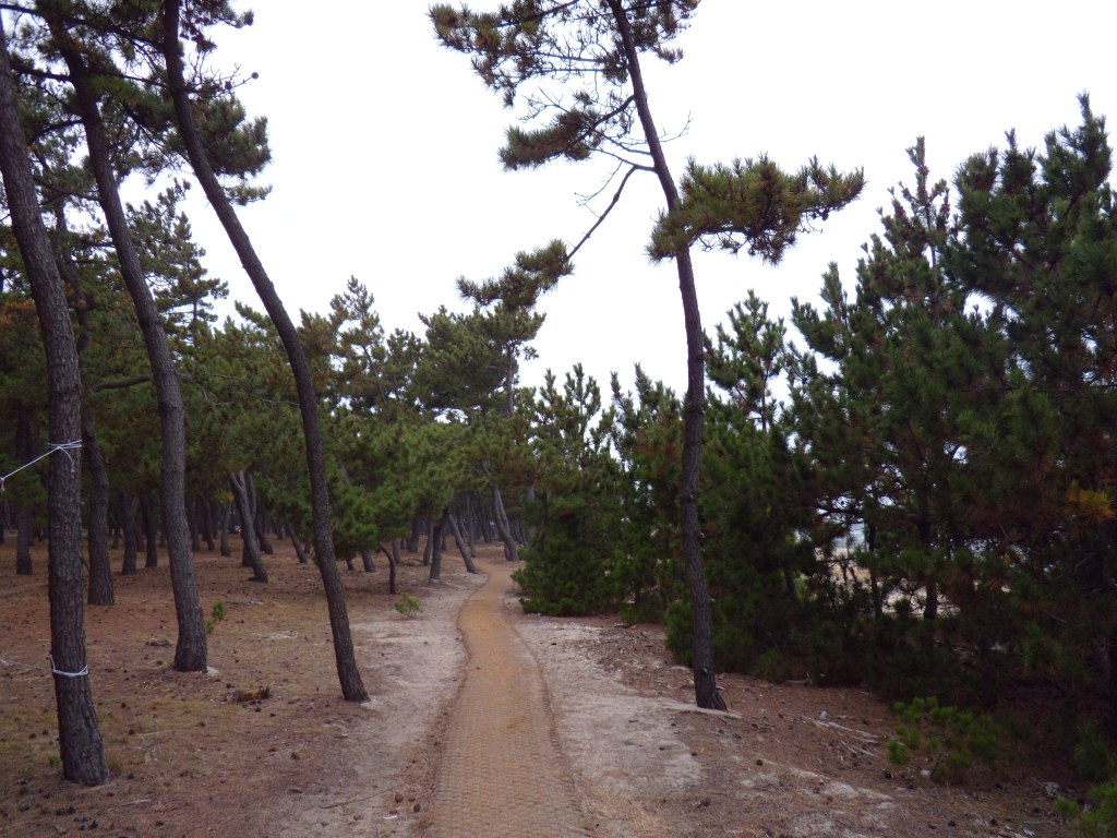 Pine Tree Walk: not seen, military bunkers