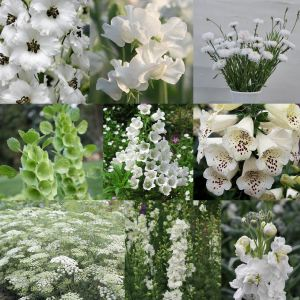 White Spring Cottage Garden Box