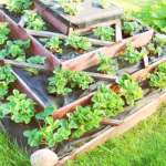 Benefits of Raised Bed Gardens