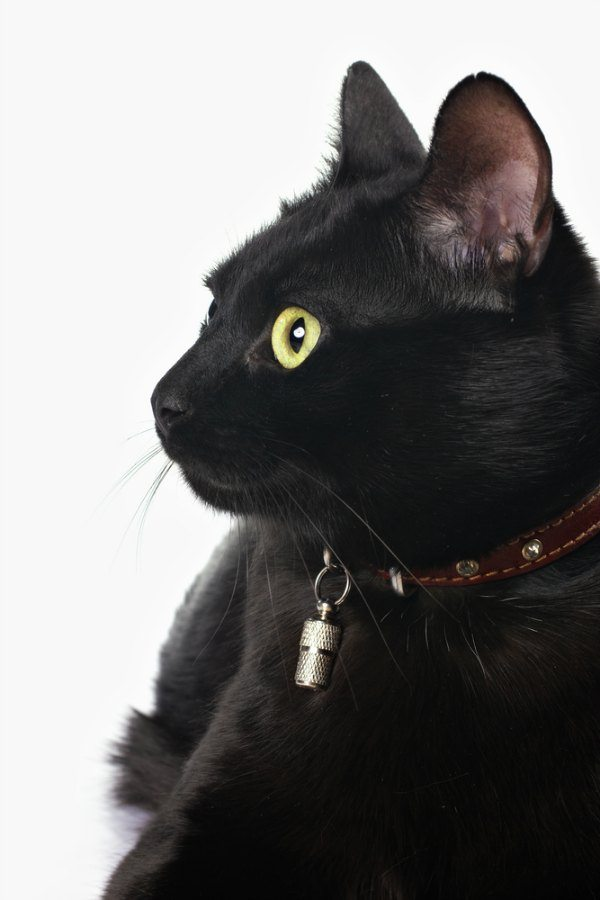 Thinking about adopting a cat? Read this first.