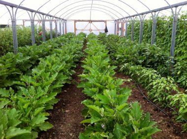 Fold Farm for website-16