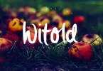 Witold Script [3 Fonts] | The Fonts Master
