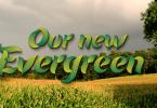 Evergreen [3 Fonts]