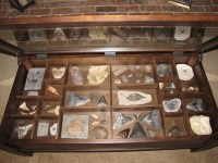 Coffee Table Display Case. - Member Collections - The ...