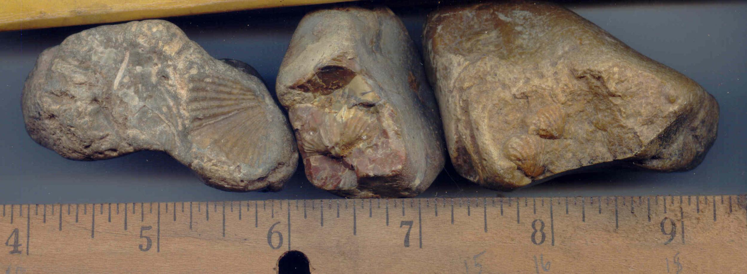 Fossils Identifying Fossils