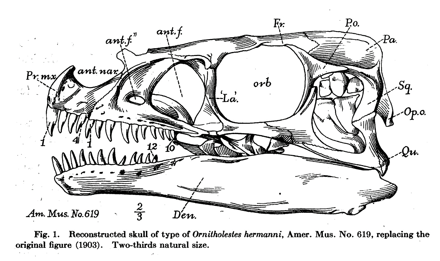 Identification of Theropod Teeth of the Morrison Fm