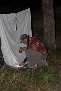Jeff Babson, wildlife viewing specialist for Pima County, examines moths and other insects attracted by a mercury vapor lamp he set up in Madera Canyon Picnic Area near Green Valley, Arizona, on July 26, 2014.