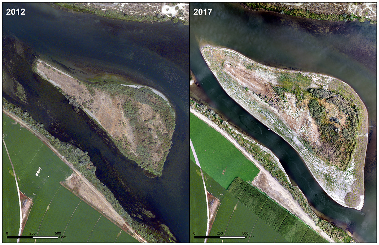 Bayha Island floodplain enhancement