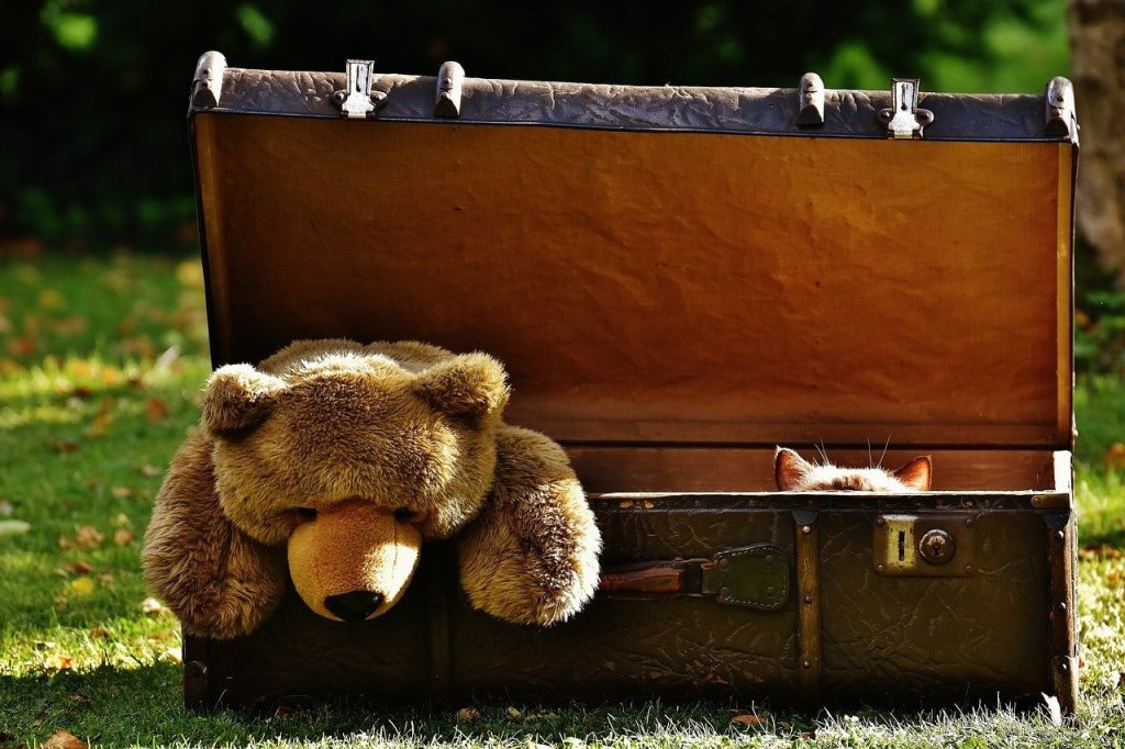 bear-luggage