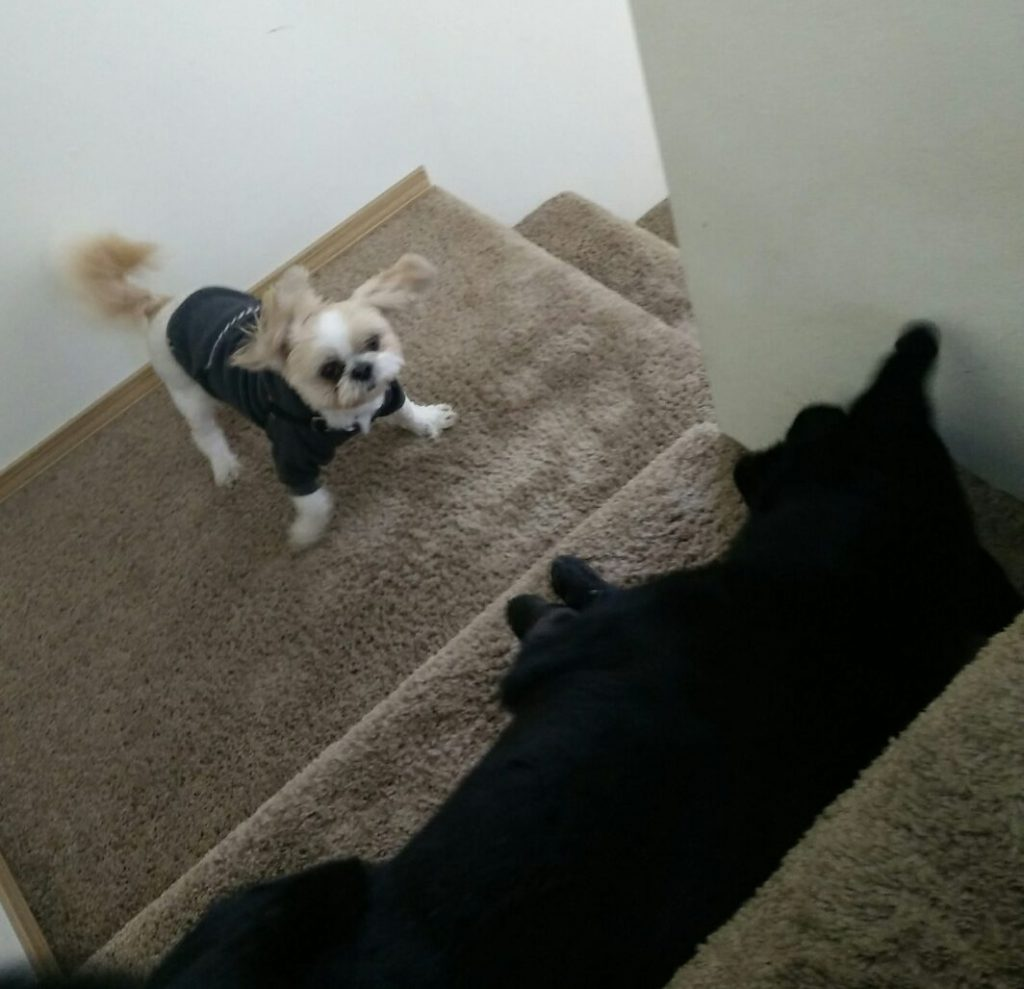 dogs being funny