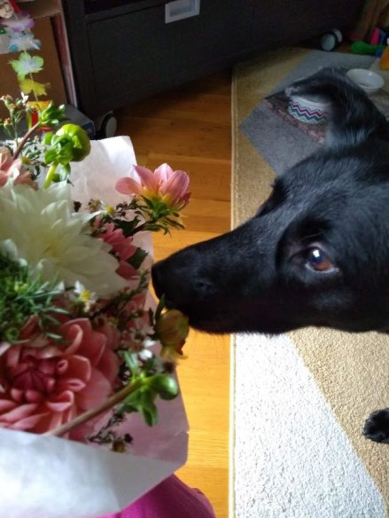 flowers-for-my-doggy