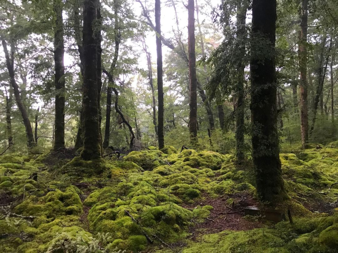 Lush forest in the Kepler Track