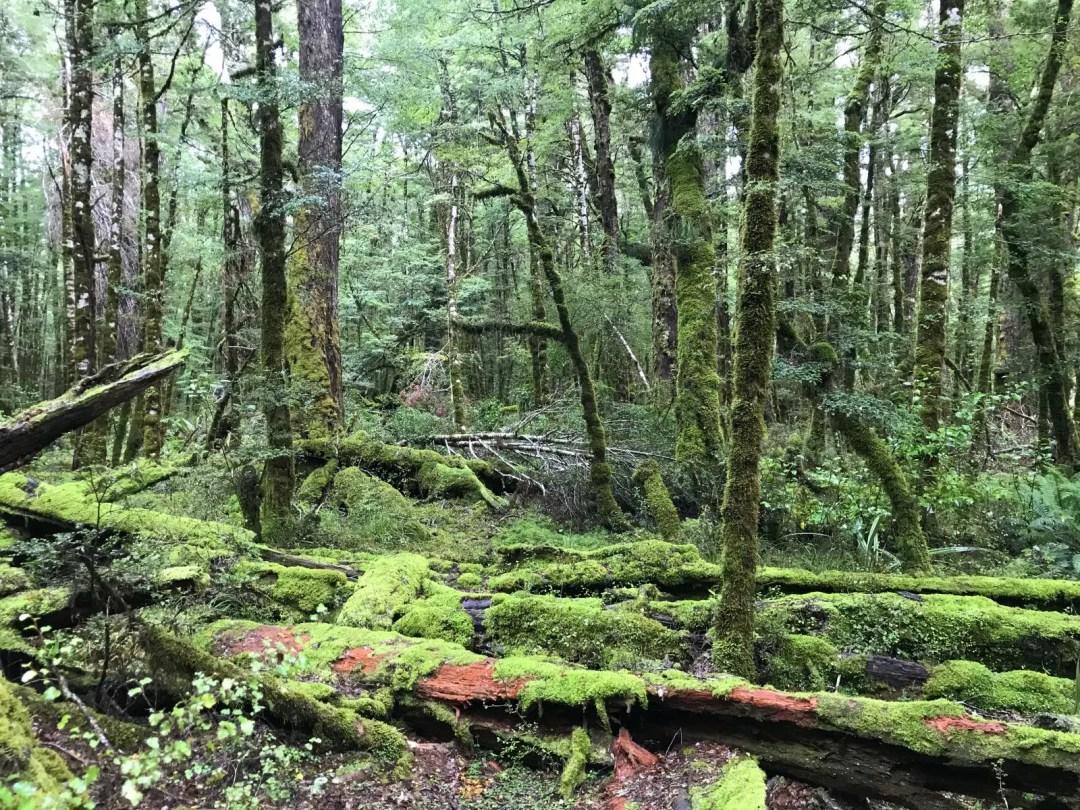Lush forest near Cascade Creek