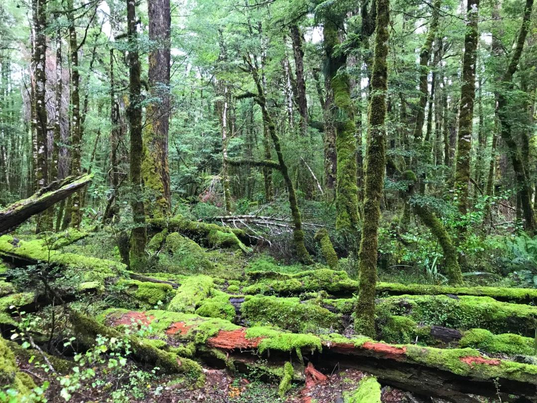 Lush forest near Cascade Creek