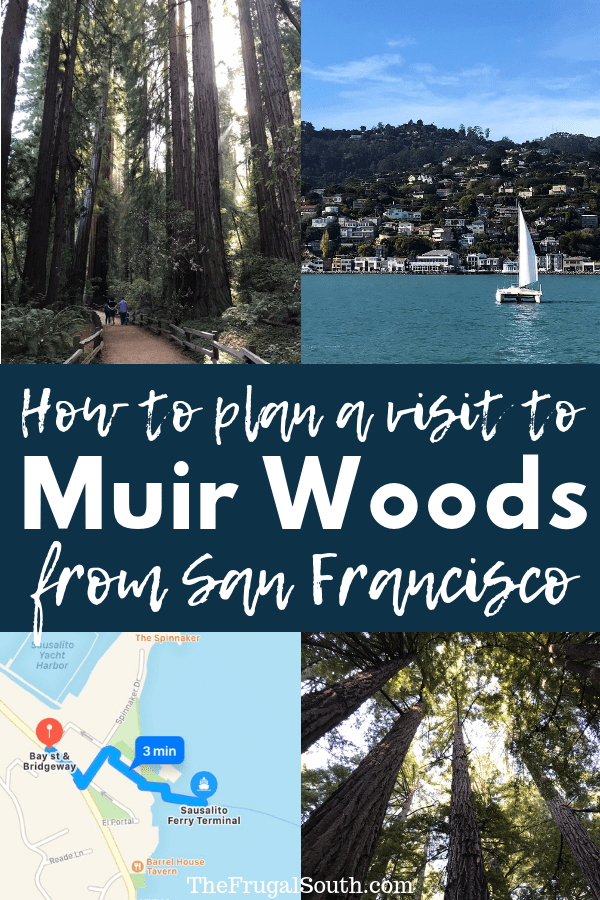 How to plan a DIY trip to Muir Woods from San Francisco! How to catch the ferry to Sausalito and the Muir Woods shuttle there, all for WAY less than you\'d pay for a tour package. Easy budget and family travel tips from The Frugal South! #muirwoods #sanfrancisco #familytravel #cheaptravel #travelwithkids #sausalito #californiatravel #california #familytraveltips