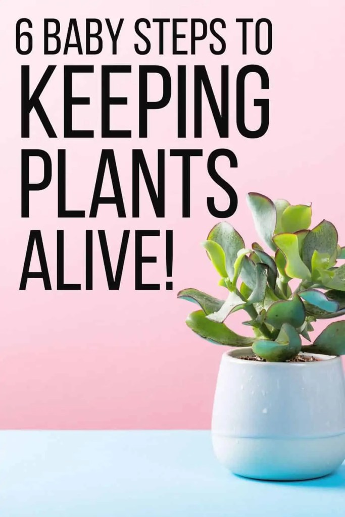 Needing a houseplant that is hard to kill? Are you a newbie plant owner? If so, here is your low maintenance guid to keep your plants alive!