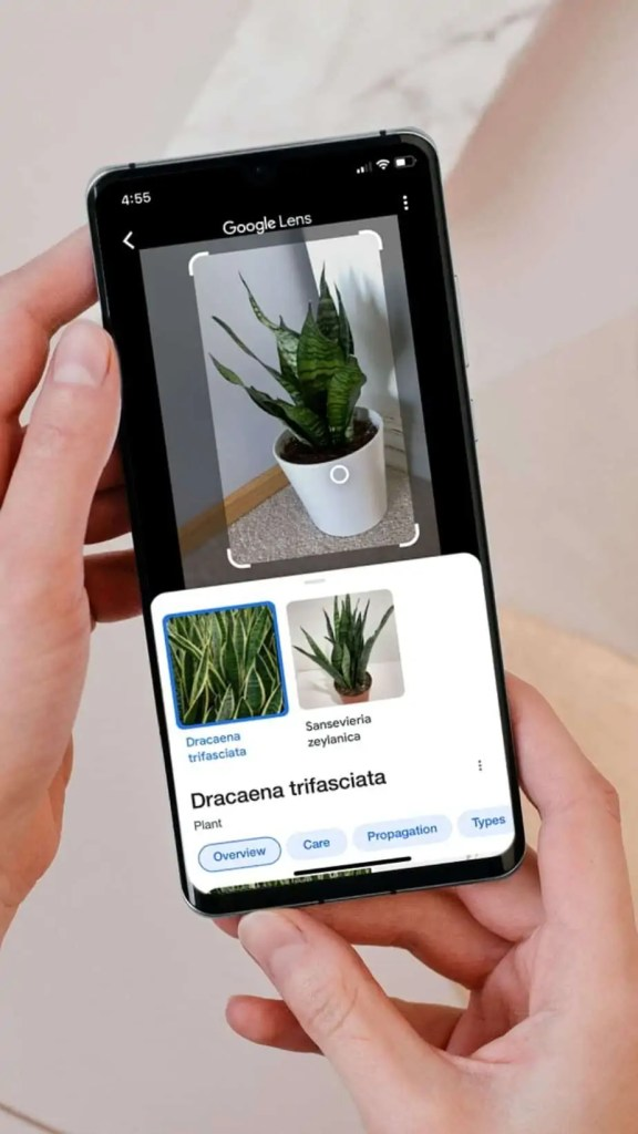 Learn how to take care of your houseplants with Google Images