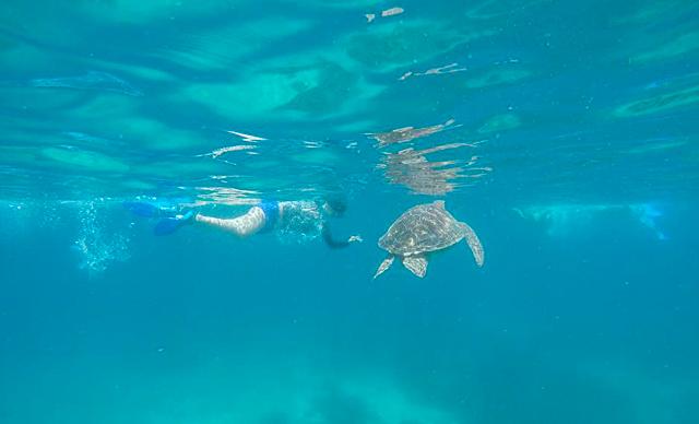 Swim with the turtles in Apo island