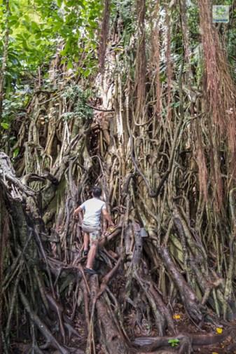 Climbing up the Balete tree.