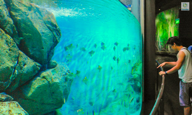 At SEA Aquarium.