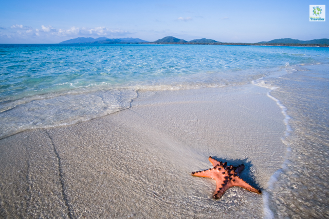 A photo of lone starfish at Candaraman Sandbar taken during a changing tide.