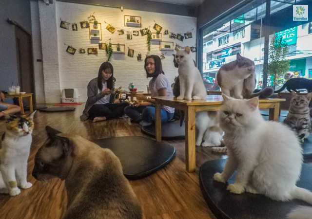 Inside Cat N A Cup Cafe.
