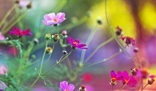Beautiful garden of spring flowers