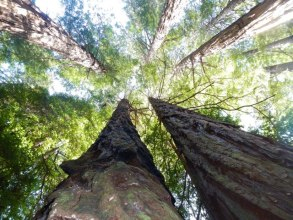 Redwood trees at Muir Woods - Hipmunk
