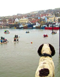 The Gap Year Edit Alternative Travel Awards - most obliging animal in a photo - happy dog, Scarborough, Yorkshire, England