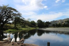 The Gap Year Edit Alternative Travel Awards - most obliging animal in a photo - ducks in a row, Selva Negra, Nicaragua