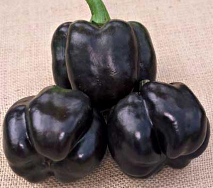holy moly peppers The Gardener39s Eden