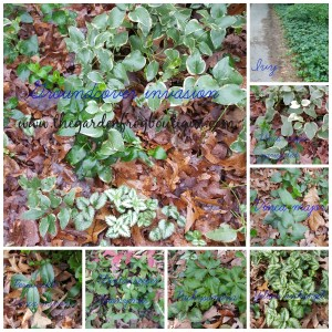 Can You Control a Groundcover?