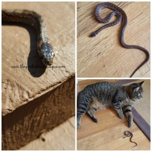 Do not kill the garden snake