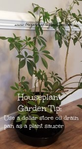Gardening houseplant tip: use a dollar store oil drain pan as a potted plant saucer