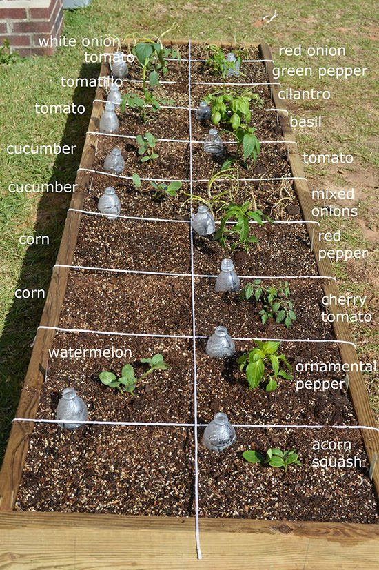 Easy Vegetable Garden Box