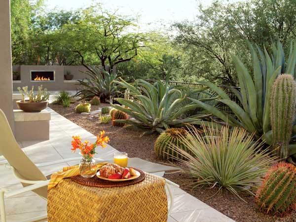 How to Give Your Desert Backyard Southwestern Flair  The Garden Glove