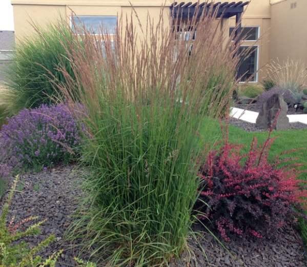 ornamental grasses update