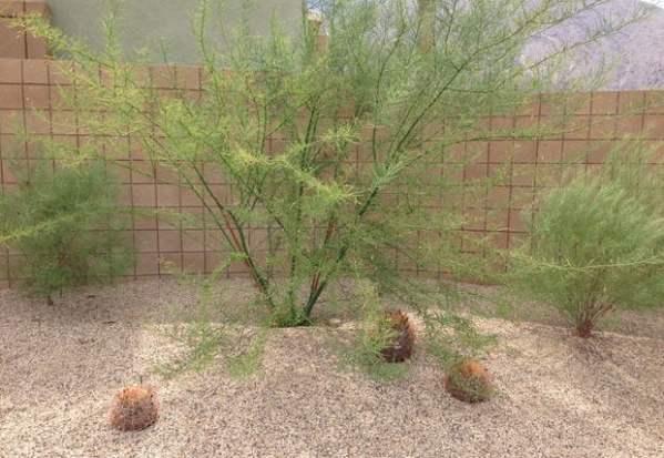 palm springs desert gardening