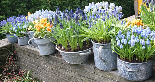 http://www.thegardenglove.com/how-to-force-spring-bulbs/