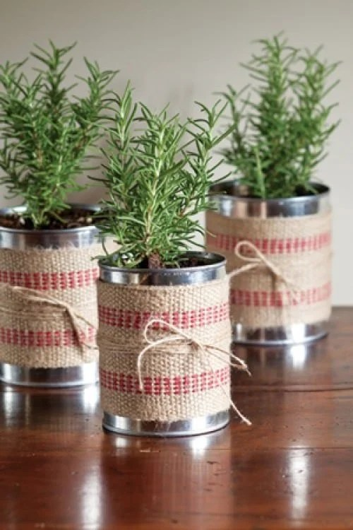 DIY Holiday Gift Plant Projects – The Garden Glove