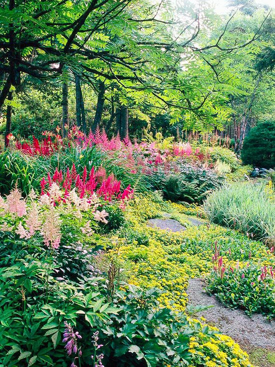 showy shade gardens garden