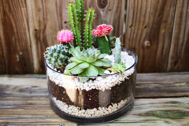 Indoor Cool Cactus & Succulent Projects – The Garden Glove