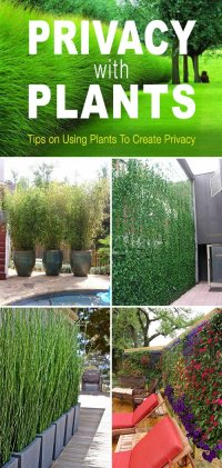 Privacy with Plants | The Garden Glove
