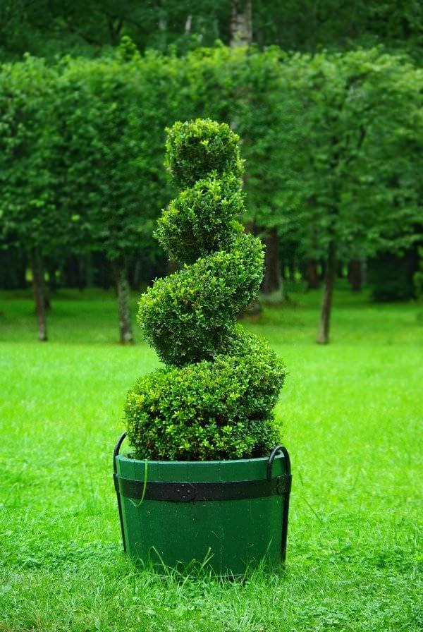 garden topiary beginners