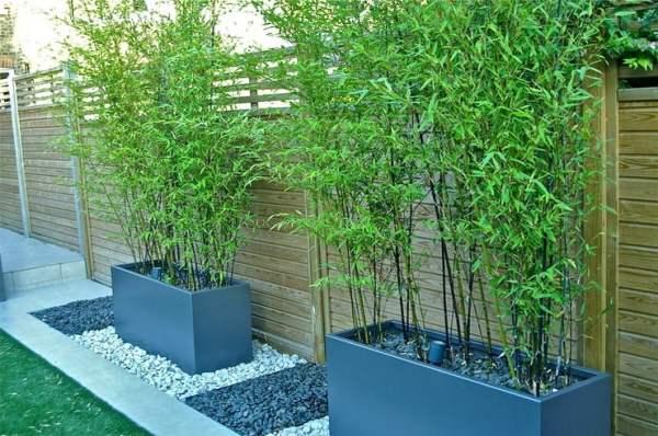 diy outdoor screens and backyard