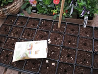 A Seed Starting Tray Filled with Potting Mix