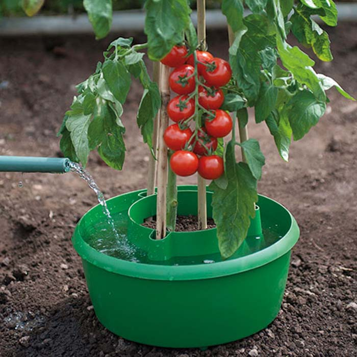 Buy Tomato Grow Pots Or Plant Halos For Low Cost Online