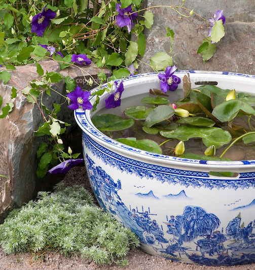 Planting Tips & Ideas For A Container Water Garden The Claudia