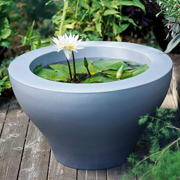 ideas for a container water garden