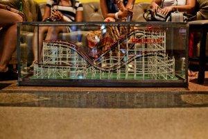 Drakeland roller coaster